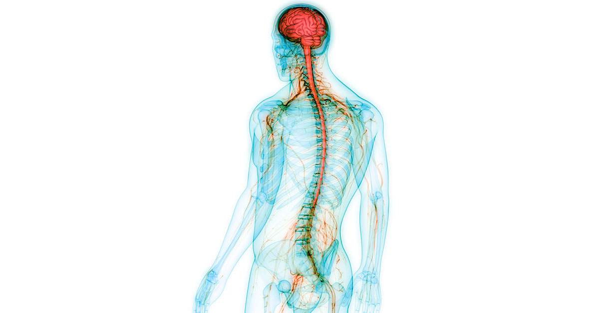 What Do the Different Parts of The Nervous System Do ...